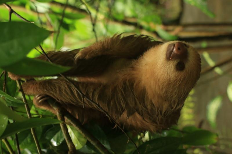 Nature au Costa Rica Img_6310