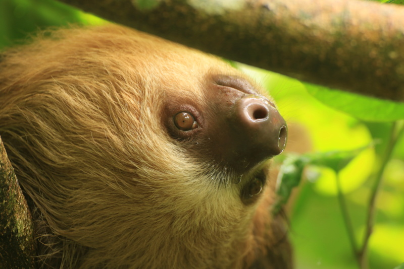 Nature au Costa Rica Img_6311