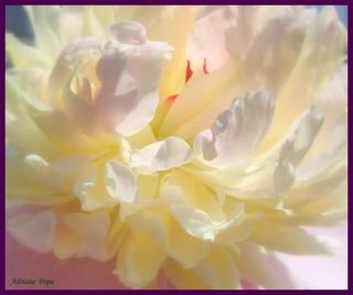 Nos amies les fleurs (Symbolisme) - Page 10 33265711
