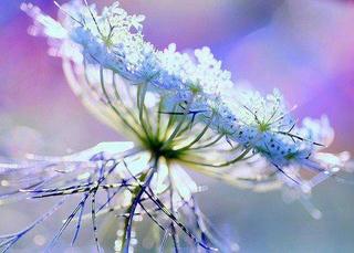 Nos amies les fleurs (Symbolisme) - Page 9 95364710