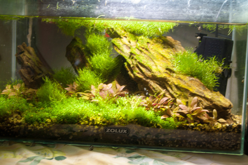 20l aquascaping  Bord-812