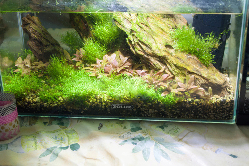 20l aquascaping  Bord-813