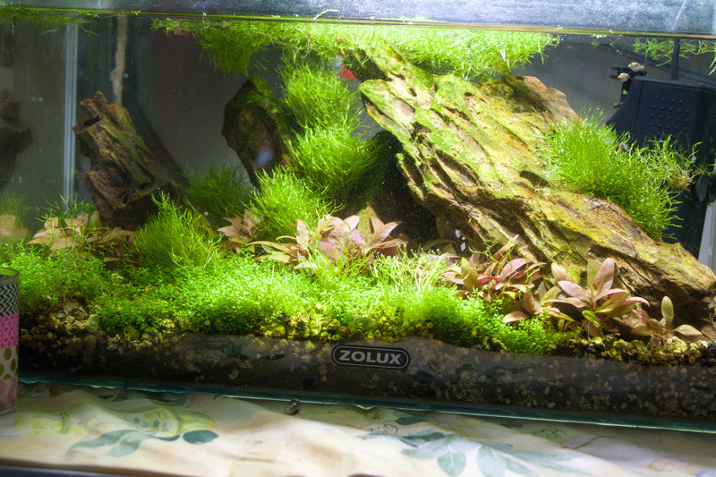 20l aquascaping  Bord-912