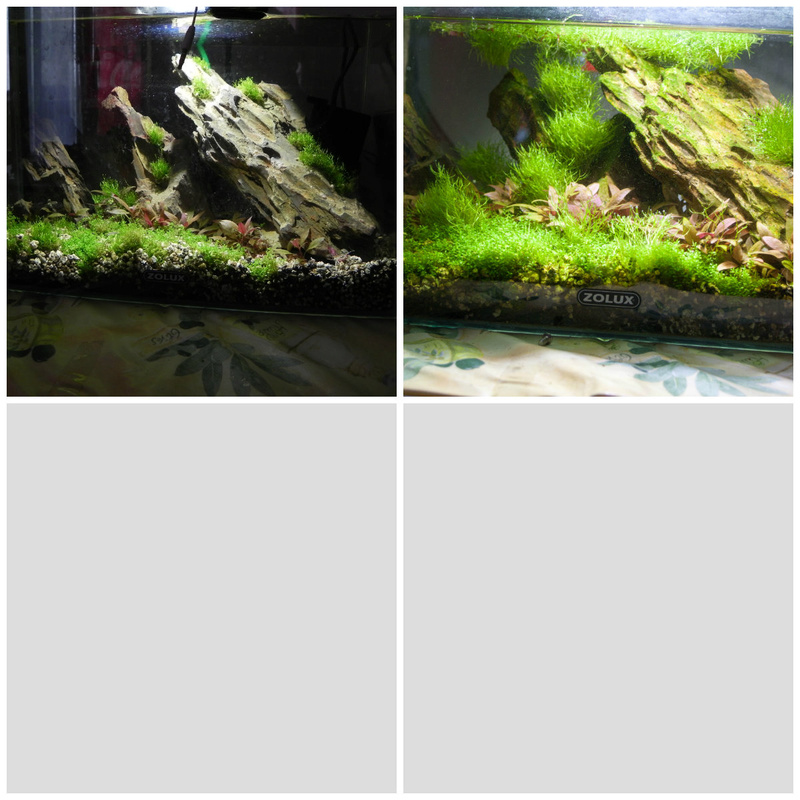 20l aquascaping  Collag10