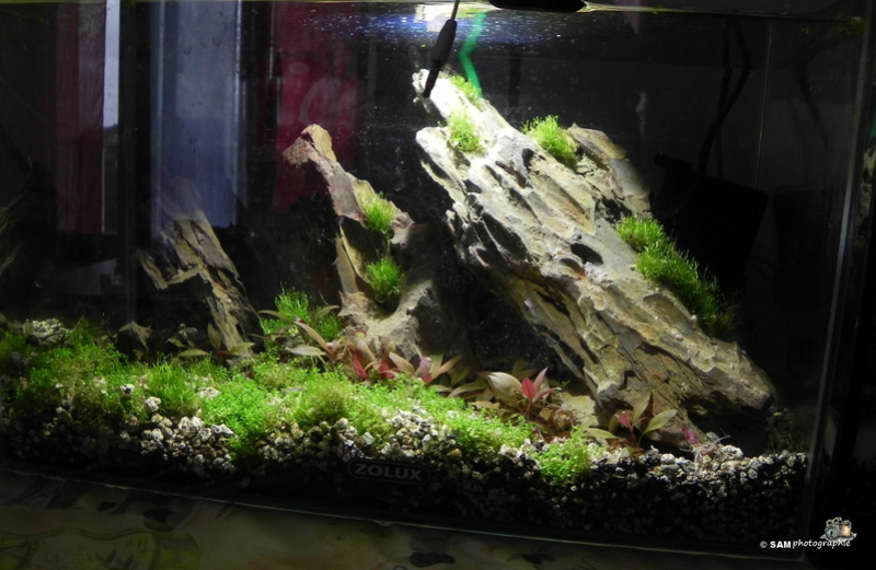 20l aquascaping  Depot_11