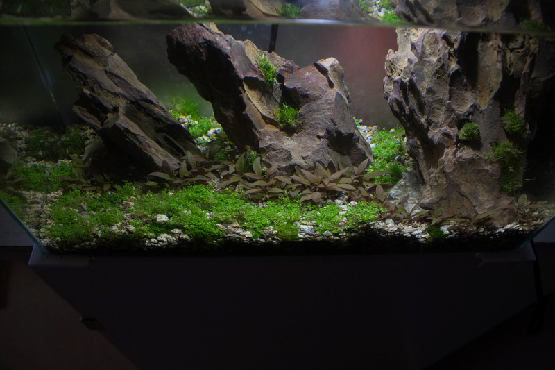 20l aquascaping  Depot_12