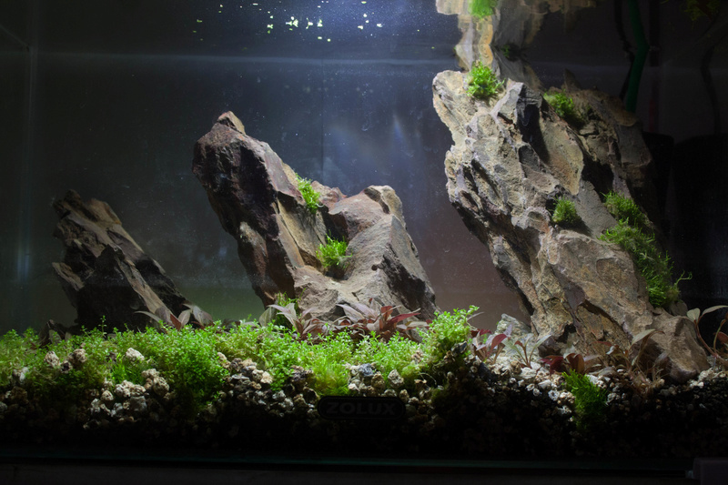 20l aquascaping  Depot_15