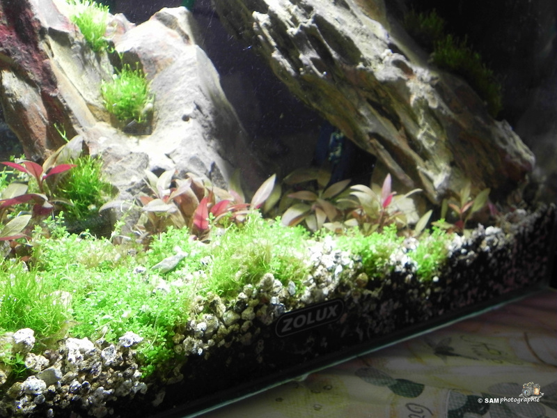 20l aquascaping  Depot_16