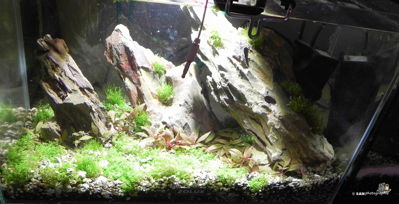 20l aquascaping  Depot_17
