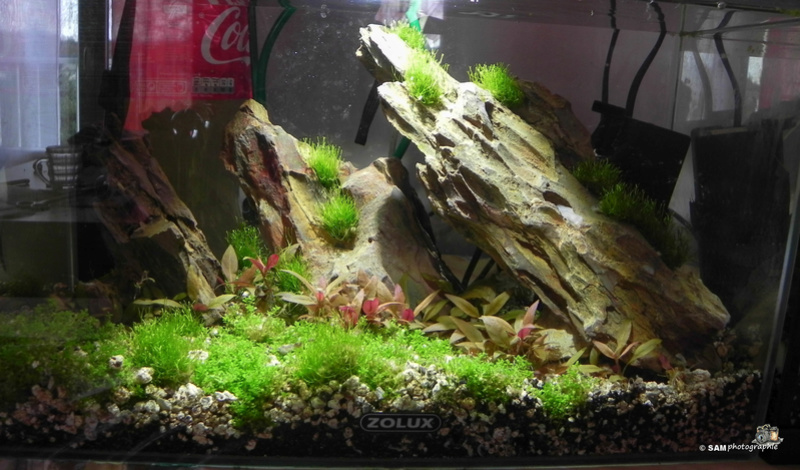 20l aquascaping  Depot_20