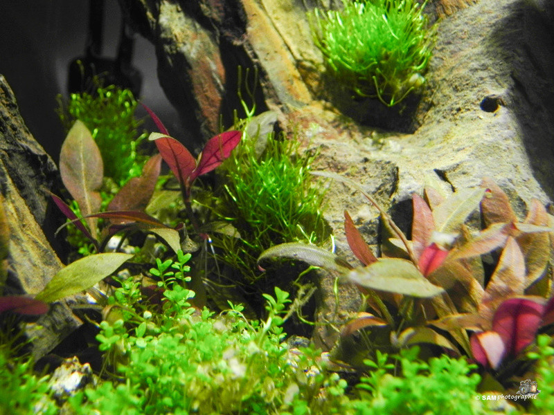 20l aquascaping  Depot_25