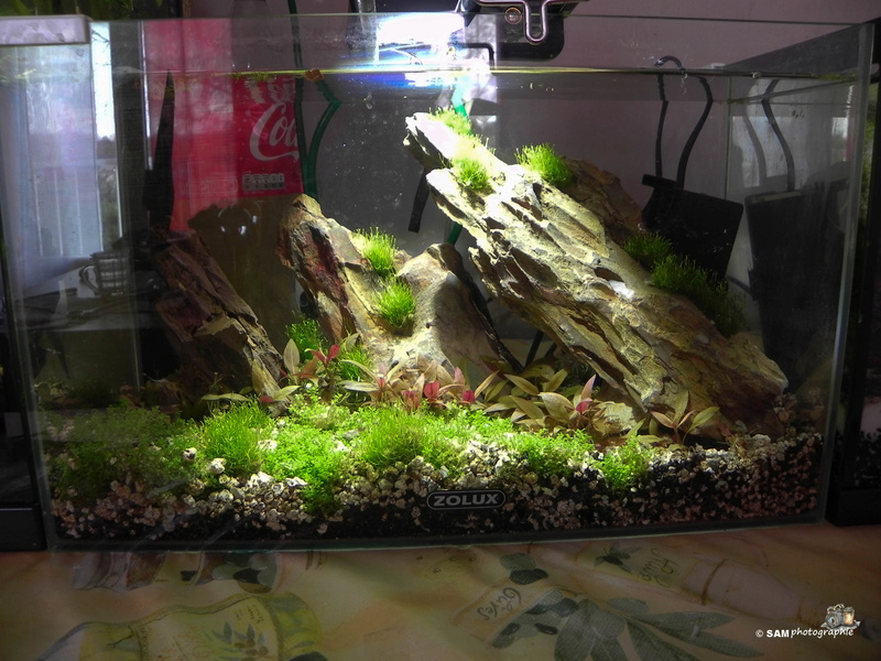 20l aquascaping  Depot_26
