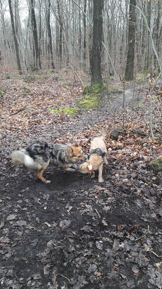 VICTOR un chien en grande souffrance - BULGARIE 16522511