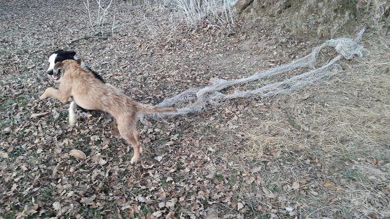 VICTOR un chien en grande souffrance - BULGARIE 16650412