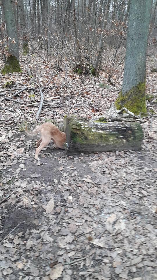 VICTOR un chien en grande souffrance - BULGARIE 16650413