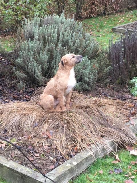 VICTOR un chien en grande souffrance - BULGARIE 16651711