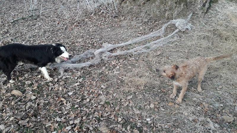 VICTOR un chien en grande souffrance - BULGARIE 16652713