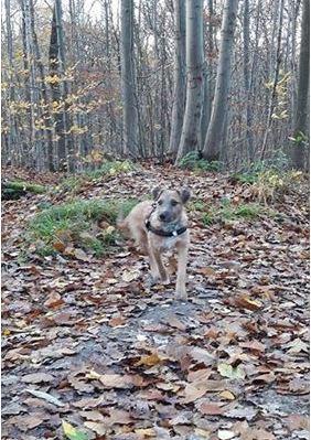VICTOR un chien en grande souffrance - BULGARIE Captur13