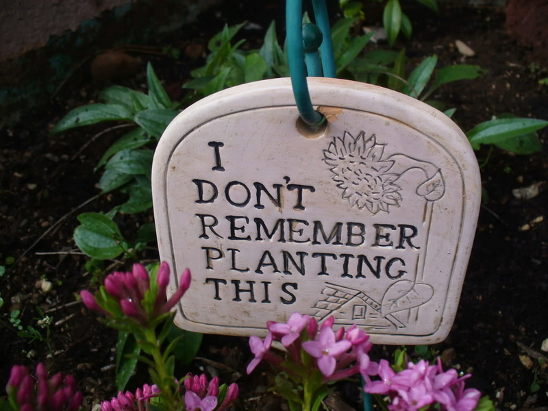 Funny garden pics Dontre10