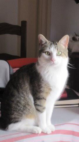 Mr Câlin, mâle type européen tigré et blanc né le 1er mai 2015 - Page 2 Unname10