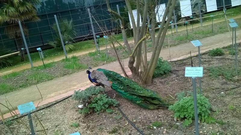 Jardin botanique Henry Gaussen (Toulouse) Wp_20358
