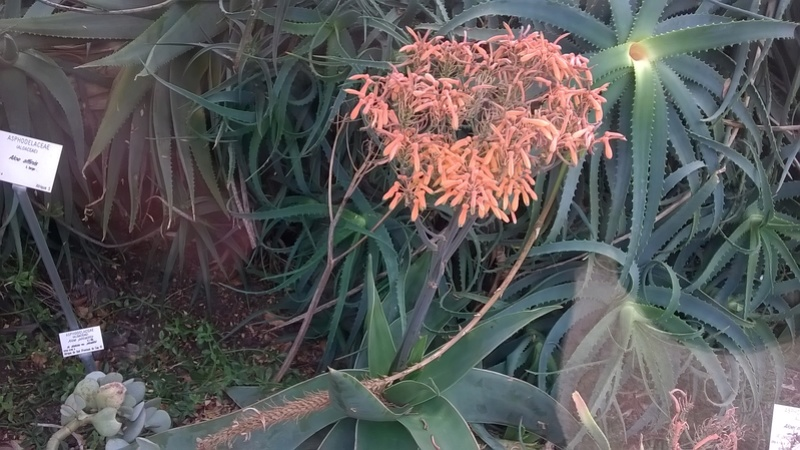 Jardin botanique Henry Gaussen (Toulouse) Wp_20376