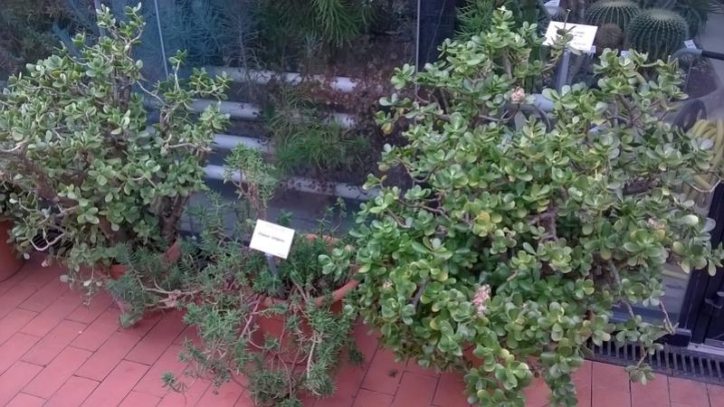 Jardin botanique Henry Gaussen (Toulouse) Wp_20381