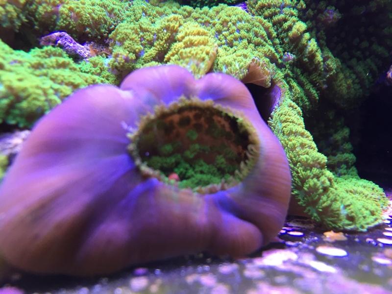 Reefer sebbordeaux  - Page 5 Image19
