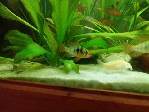 Aquarium 700 litre  15282011