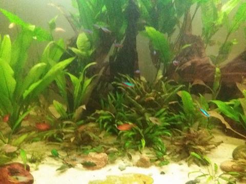 Aquarium 700 litre  15310210