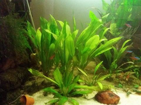 Aquarium 700 litre  15310410