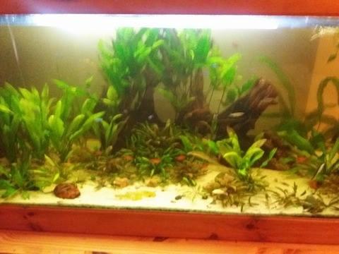 Aquarium 700 litre  15327510