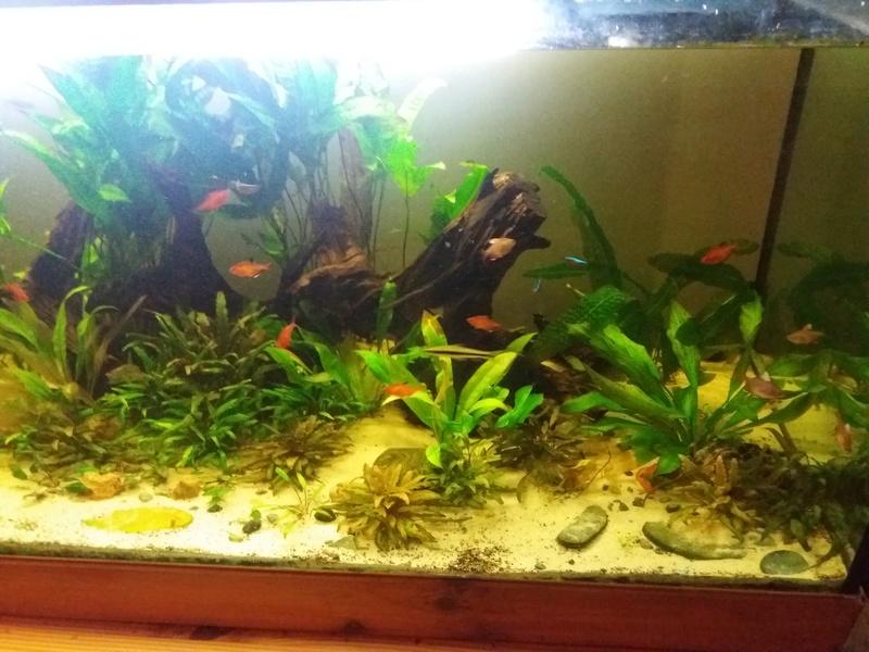 Aquarium 700 litre  20161110