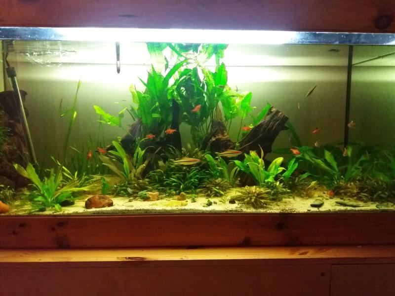 Aquarium 700 litre  20161111
