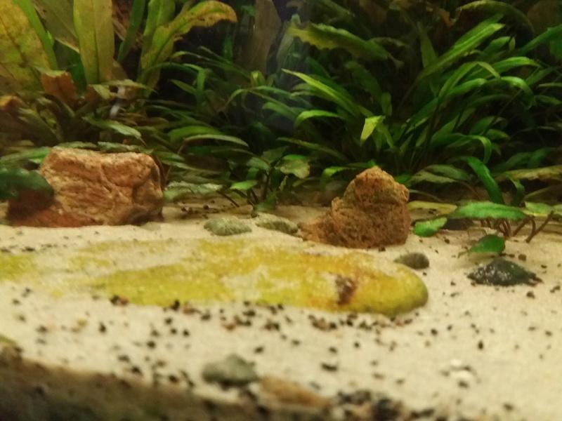 Aquarium 700 litre  20161115