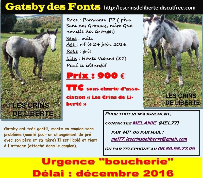 (Dept 87) GATSBY DES FONTS - Percheron PP - Adopté en 02/17, replacé en 07/20 à Christelle Gatsby10