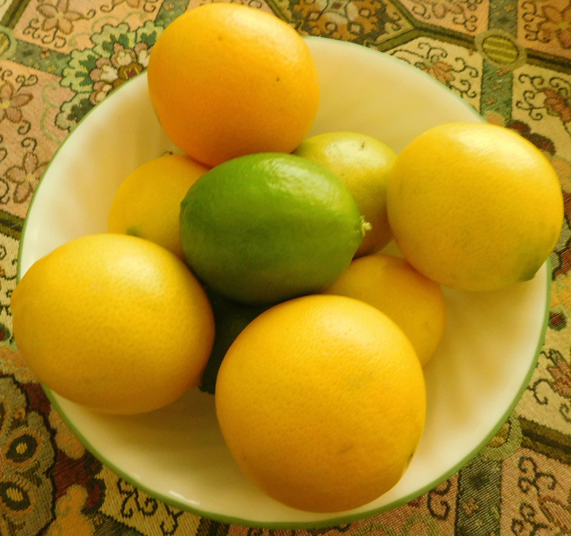 What are you eating from your garden today? - Page 39 Citrus10