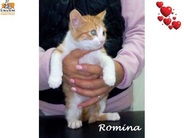 ROMINA - BLANCHE & ROUSSE - FEMELLE - ES  15078911
