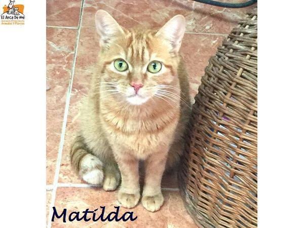 MATILDA - ROUSSE - FEMELLE - ES  16114513