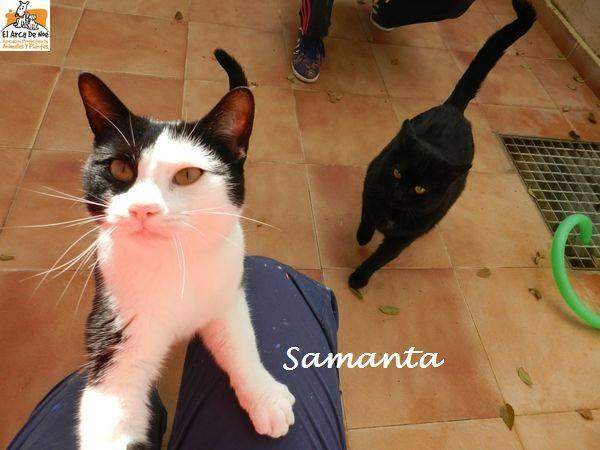 SAMANTA/CHANEL - NOIRE & BLANCHE - En FA en Suisse 16406710