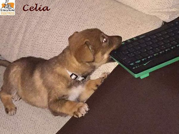 CELIA - FEMELLE - EN FA DANS LE 92  Celia_12