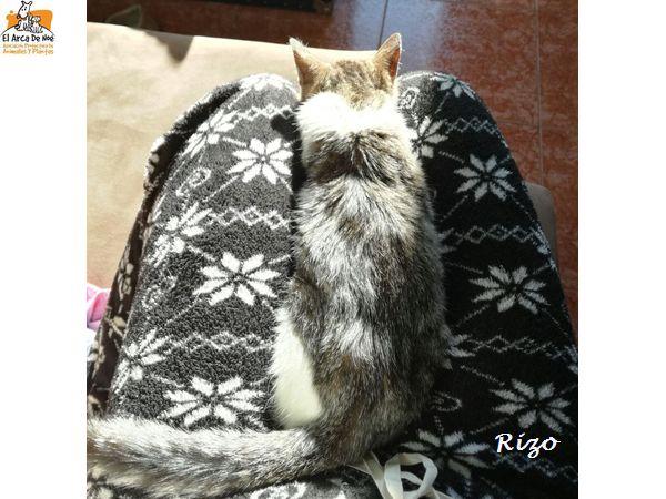 RIZO - TIGRE BLANC - MÂLE - ES  Rizo_f10