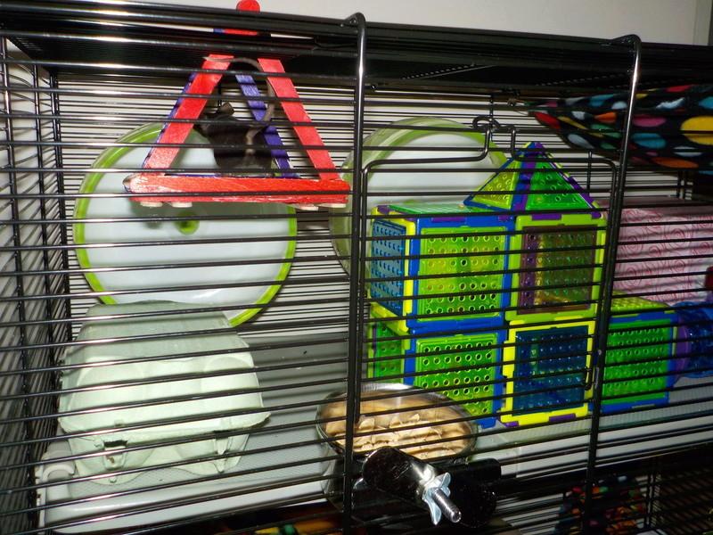 New Cage Dscn0710