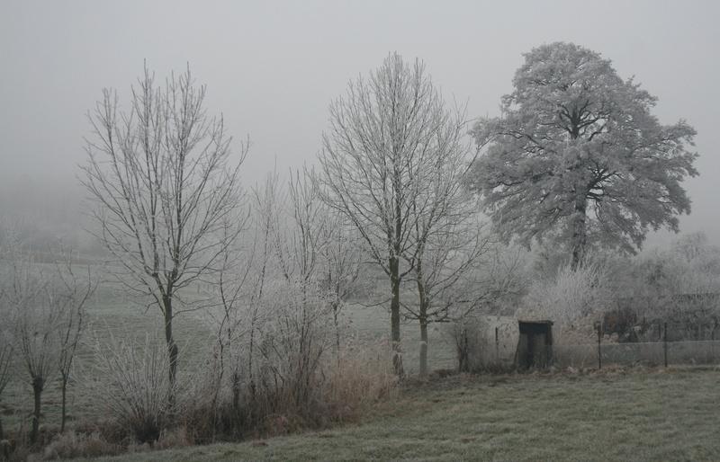 L'hiver alsacien Img_3910