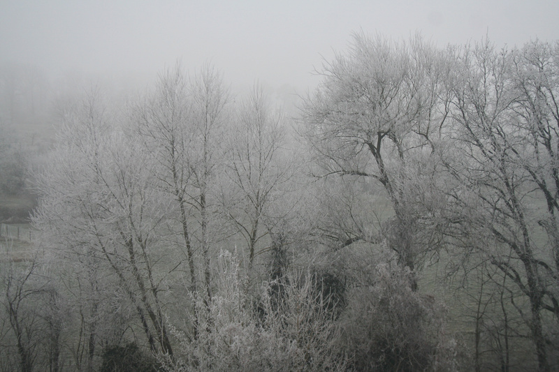 L'hiver alsacien Img_3911