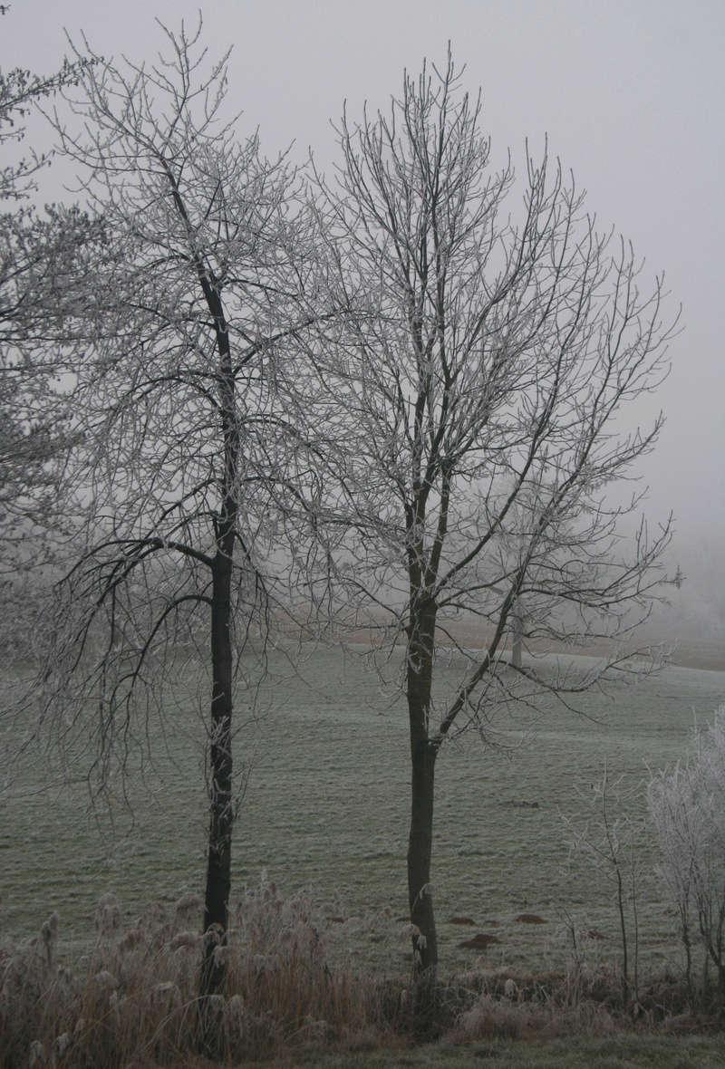 L'hiver alsacien Img_3912
