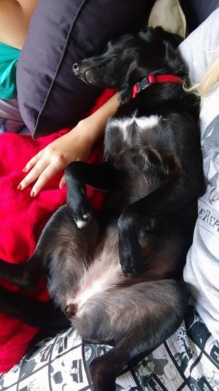 POUPI, chiot femelle, née en décembre 2015 (Pascani)-REMEMBER ME LAND - adoptée par Ludivine (Belgique) - Page 3 14924010