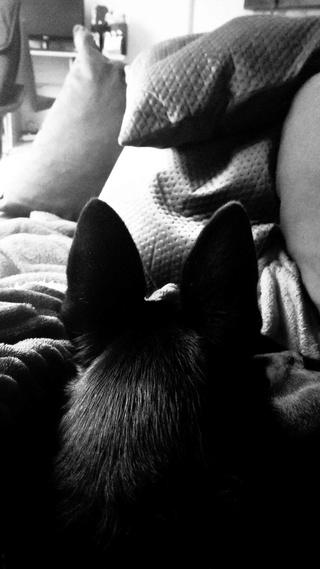 POUPI, chiot femelle, née en décembre 2015 (Pascani)-REMEMBER ME LAND - adoptée par Ludivine (Belgique) - Page 3 15933810