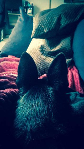 POUPI, chiot femelle, née en décembre 2015 (Pascani)-REMEMBER ME LAND - adoptée par Ludivine (Belgique) - Page 3 15935910