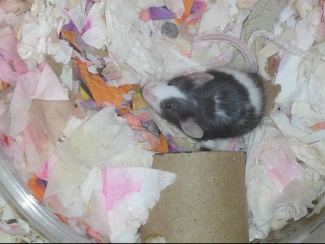 Dotty's Litter!!  - Page 3 20170130